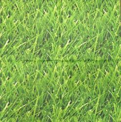 Napkin Grass