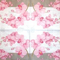 Napkin Orchids