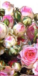Popierinė nosinaitė Rožės