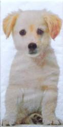 Napkin Dog