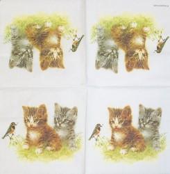 Napkin Kitten