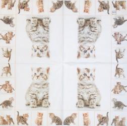 Servetėlė Kačiukai